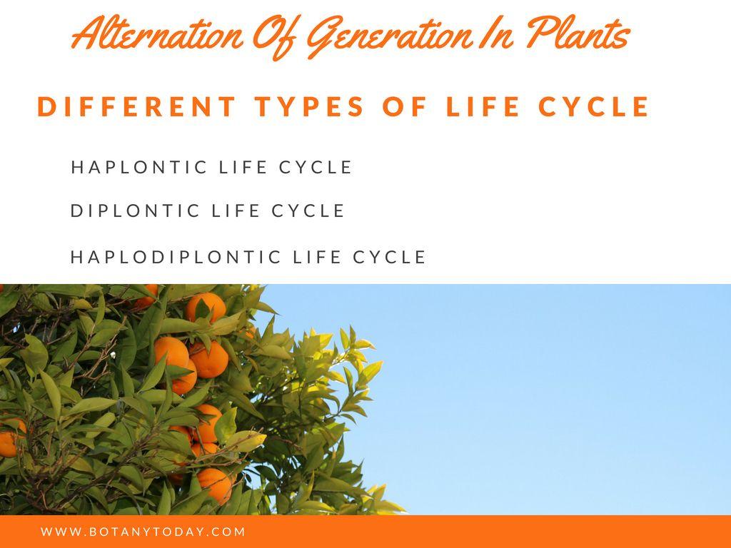 Alternation Of Generation In Plants